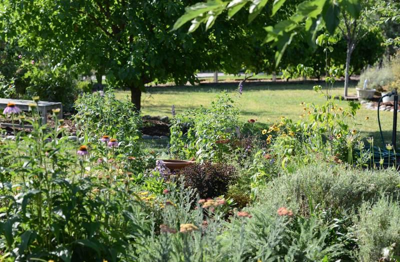 Garden_DSC_4619