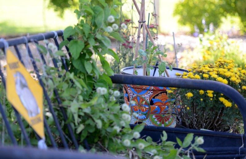Garden_DSC_4625