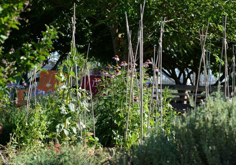 Garden_DSC_5202