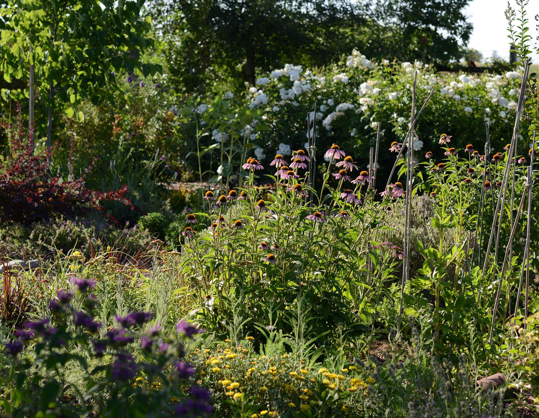 Garden_DSC_5223