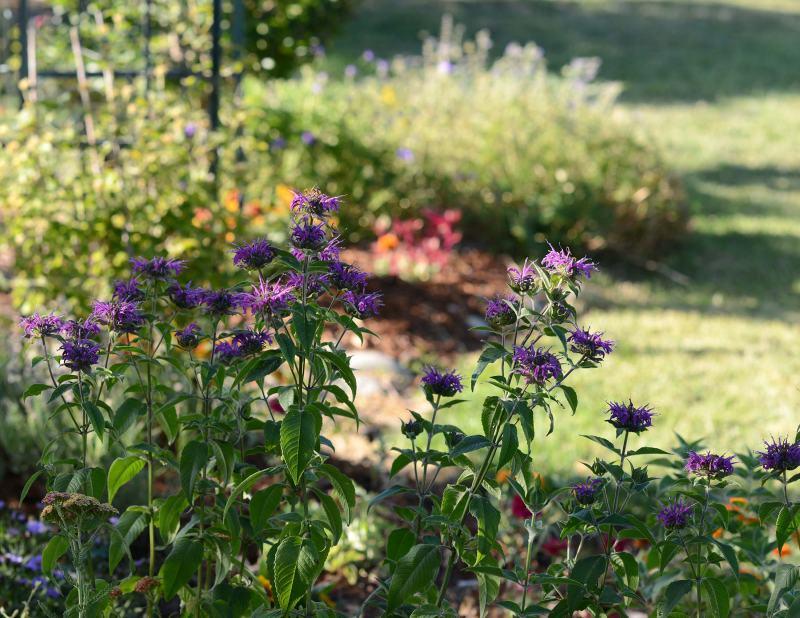 Garden_DSC_5226