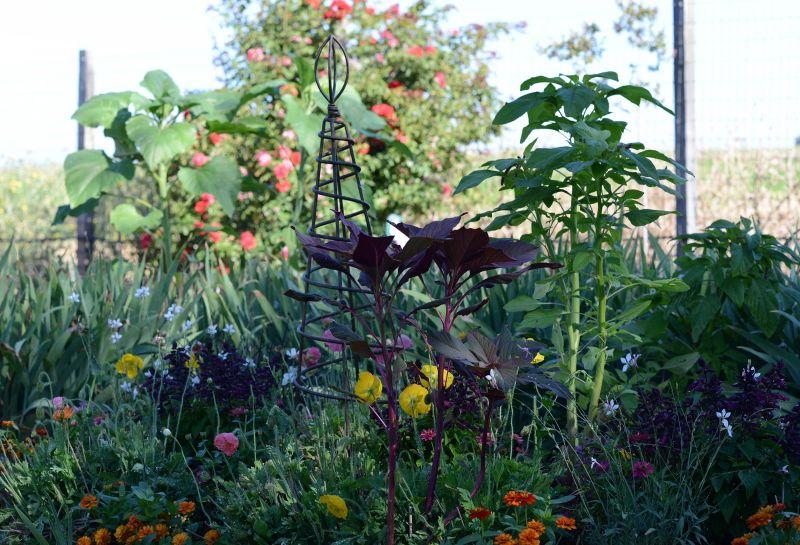 Garden_DSC_5510
