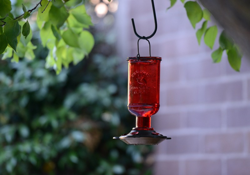 Hummingbird-Feeder_DSC_5324