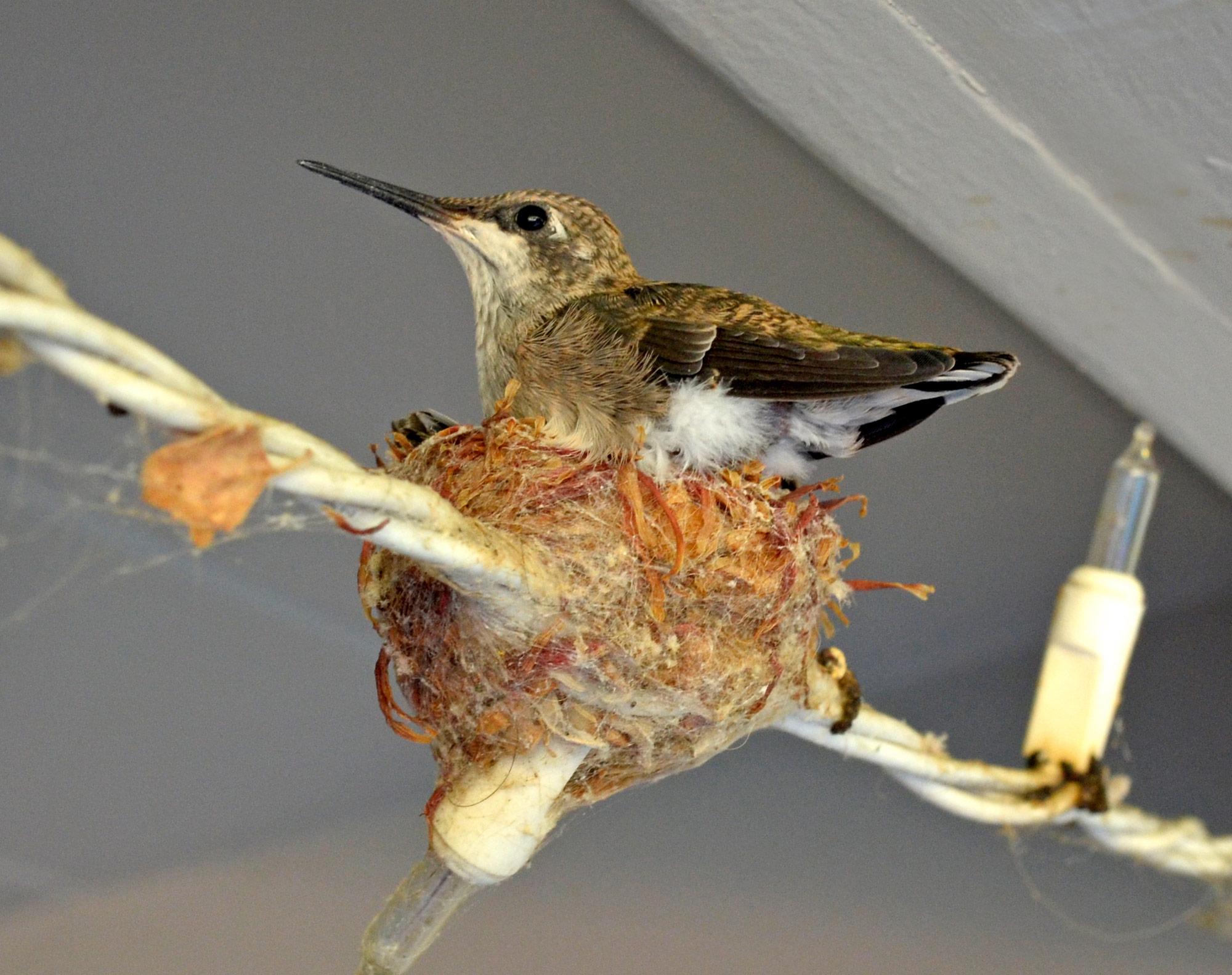 Hummingbirds_Day18_DSC_0669