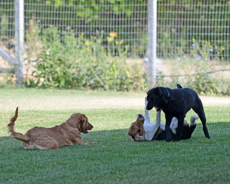 Wild Dogs Towne In Western Australia Near Naracoorte