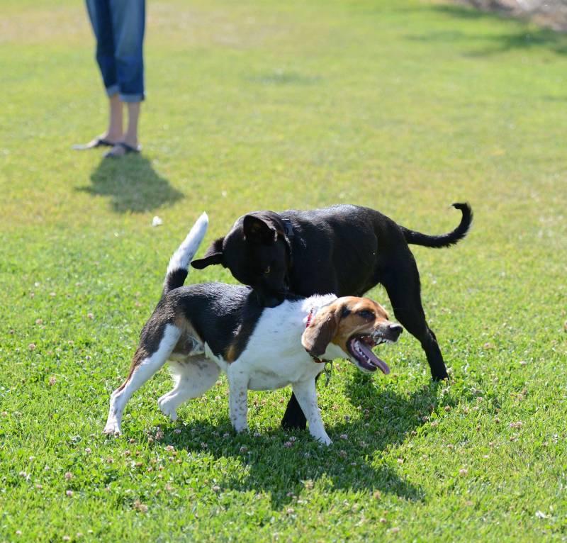 Puppy_Monsters_DSC_3920