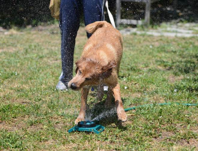 Wet_Dog_DSC_4540