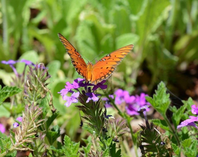 Butterfly_DSC_6176