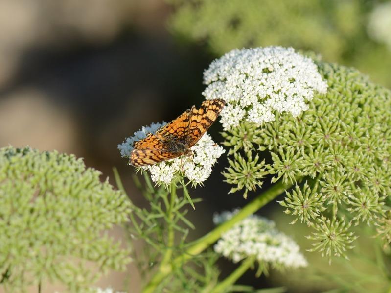 Butterfly_DSC_8639