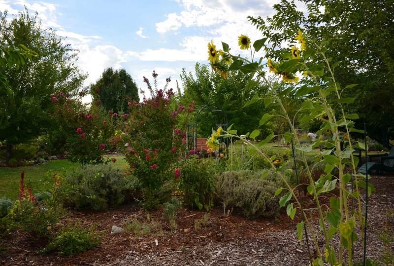 Garden_DSC_0794