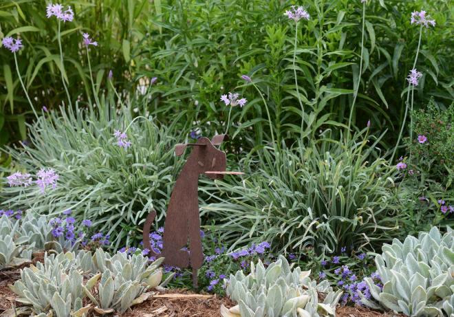 Garden_DSC_7920