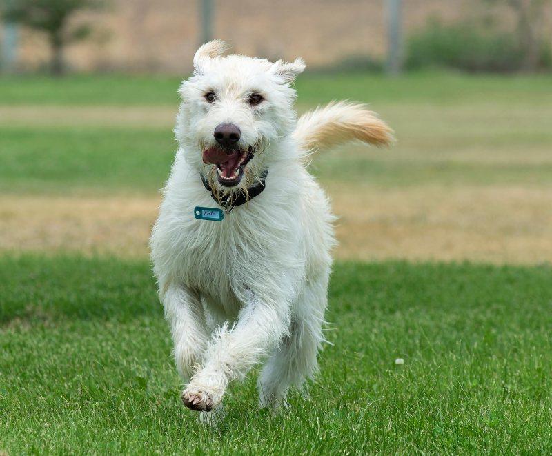 Lola S Dog Grooming Stranraer