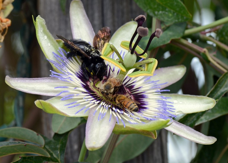 Passion_Flower_Party_DSC_8510