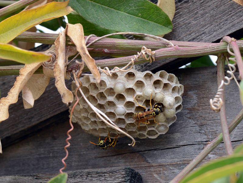 Wasps_DSC_8500