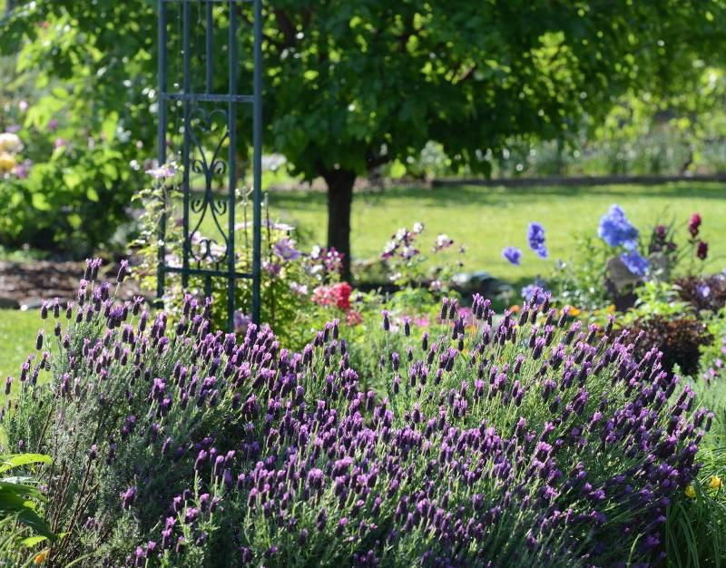 Garden_DSC_1141