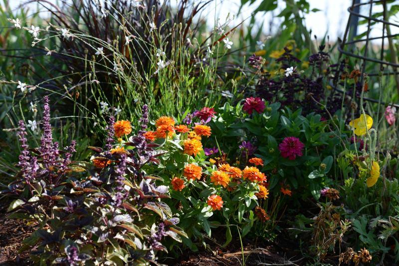 Garden_DSC_7717