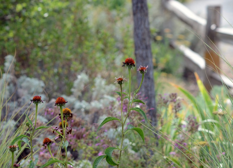 Garden_DSC_9529