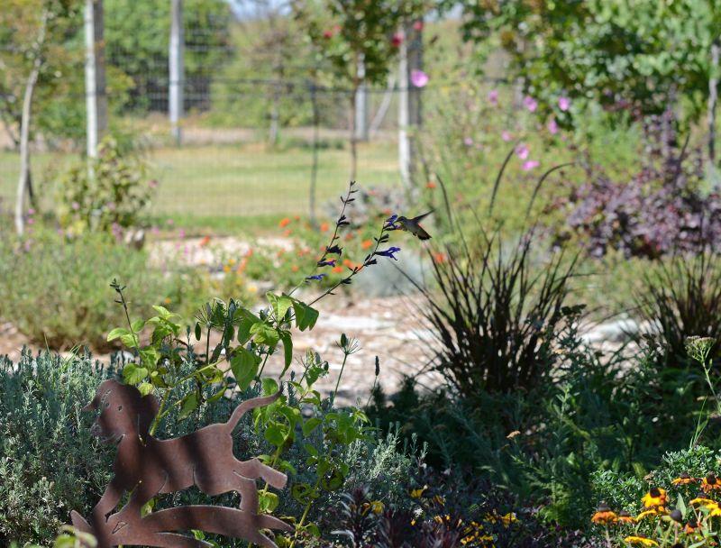 Hummingbird_DSC_0490