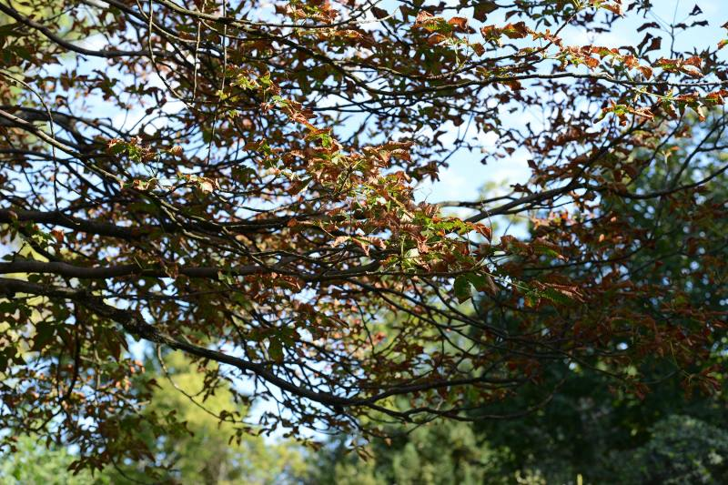 Scorched_Leaves_DSC_8615