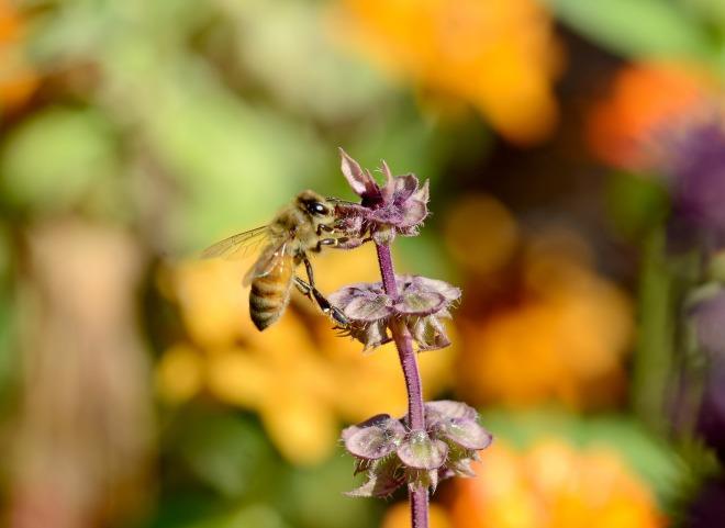 Bee_DSC_0980
