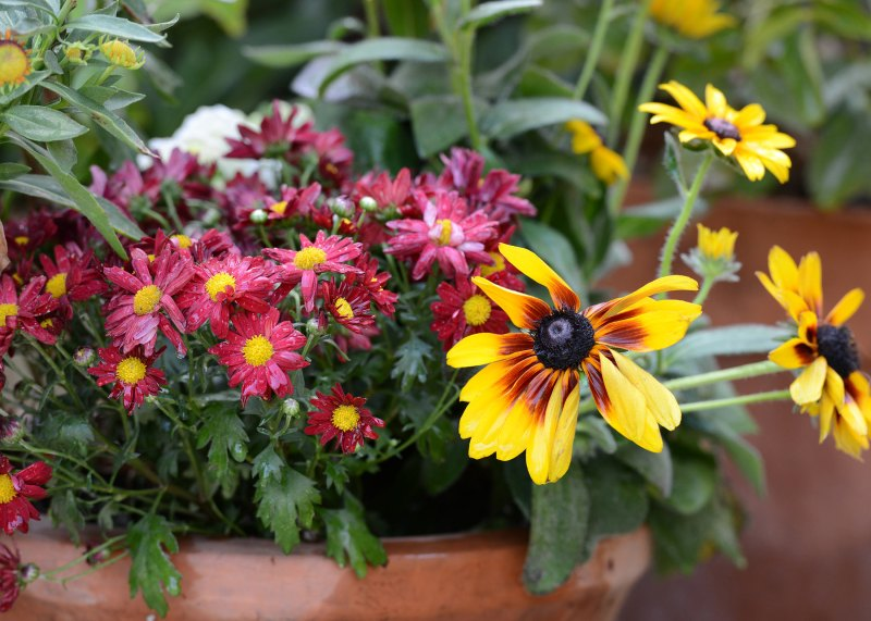 Fall-Container_DSC_4193