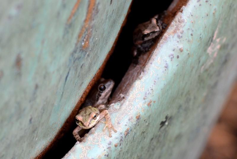 Frogs_DSC_4789