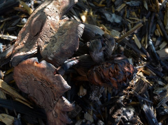 Mushroom_DSC_0041