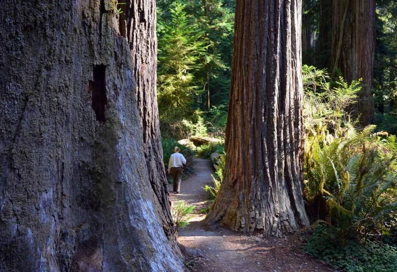 Redwoods_DSC_0868
