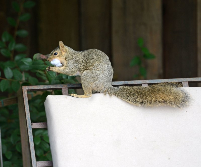 Squirrel_DSC_4215