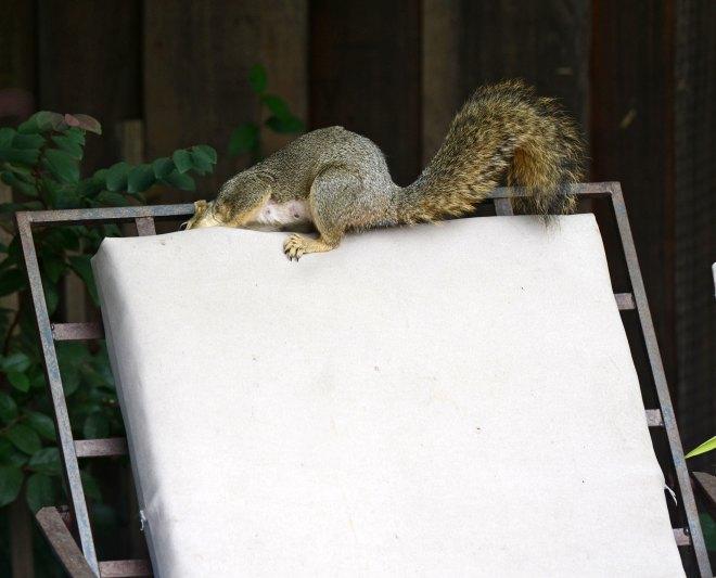 Squirrel_DSC_4219