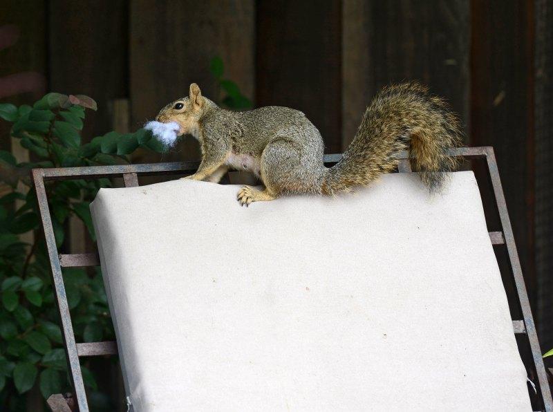 Squirrel_DSC_4220