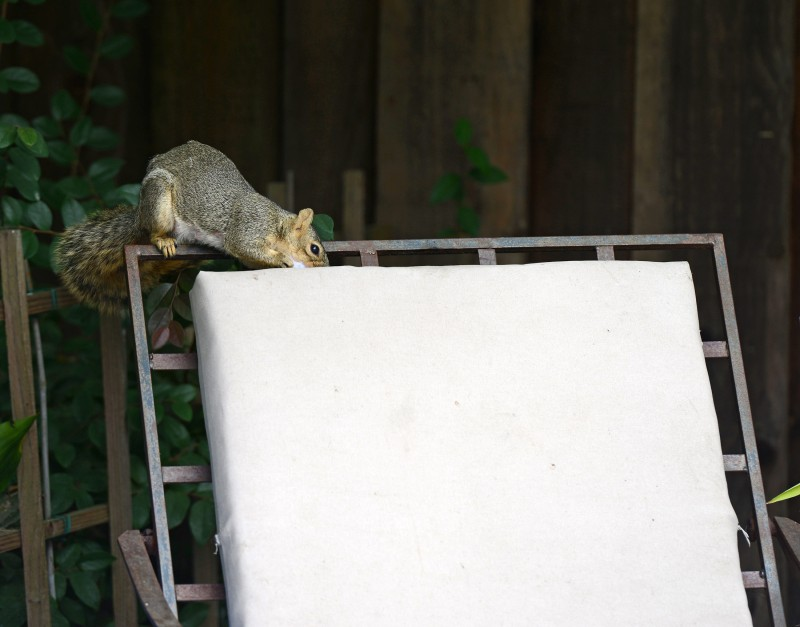 Squirrel_DSC_4228