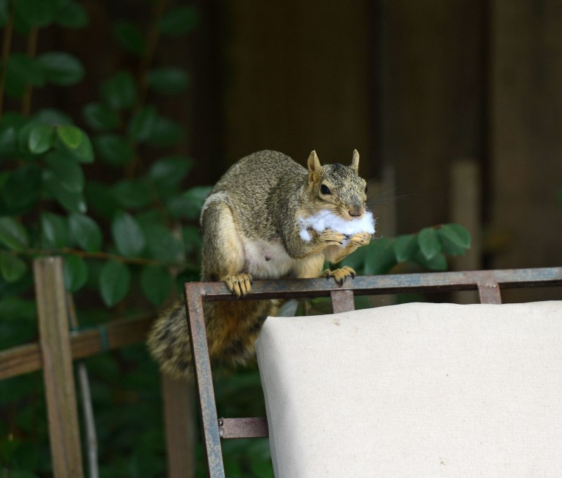 Squirrel_DSC_4241