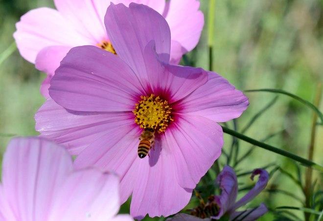 Bee_DSC_5317