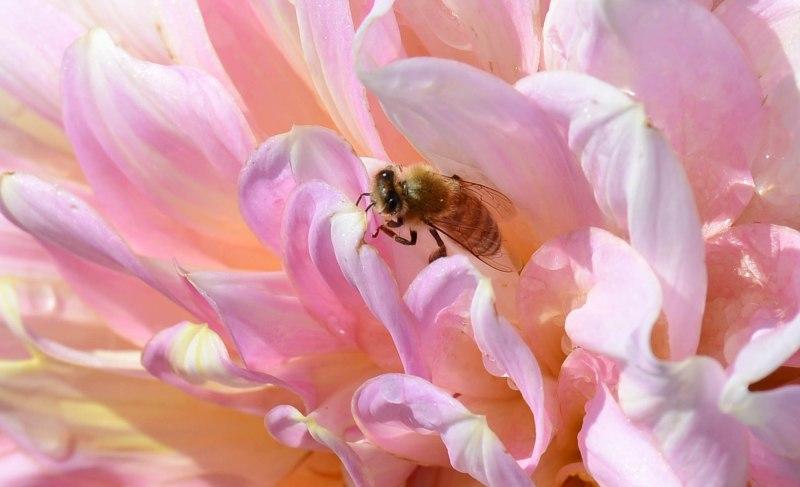 Bees_DSC_4885