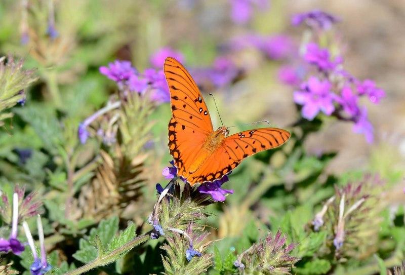 Butterfly_DSC_4851