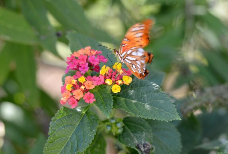 Butterfly_DSC_5580