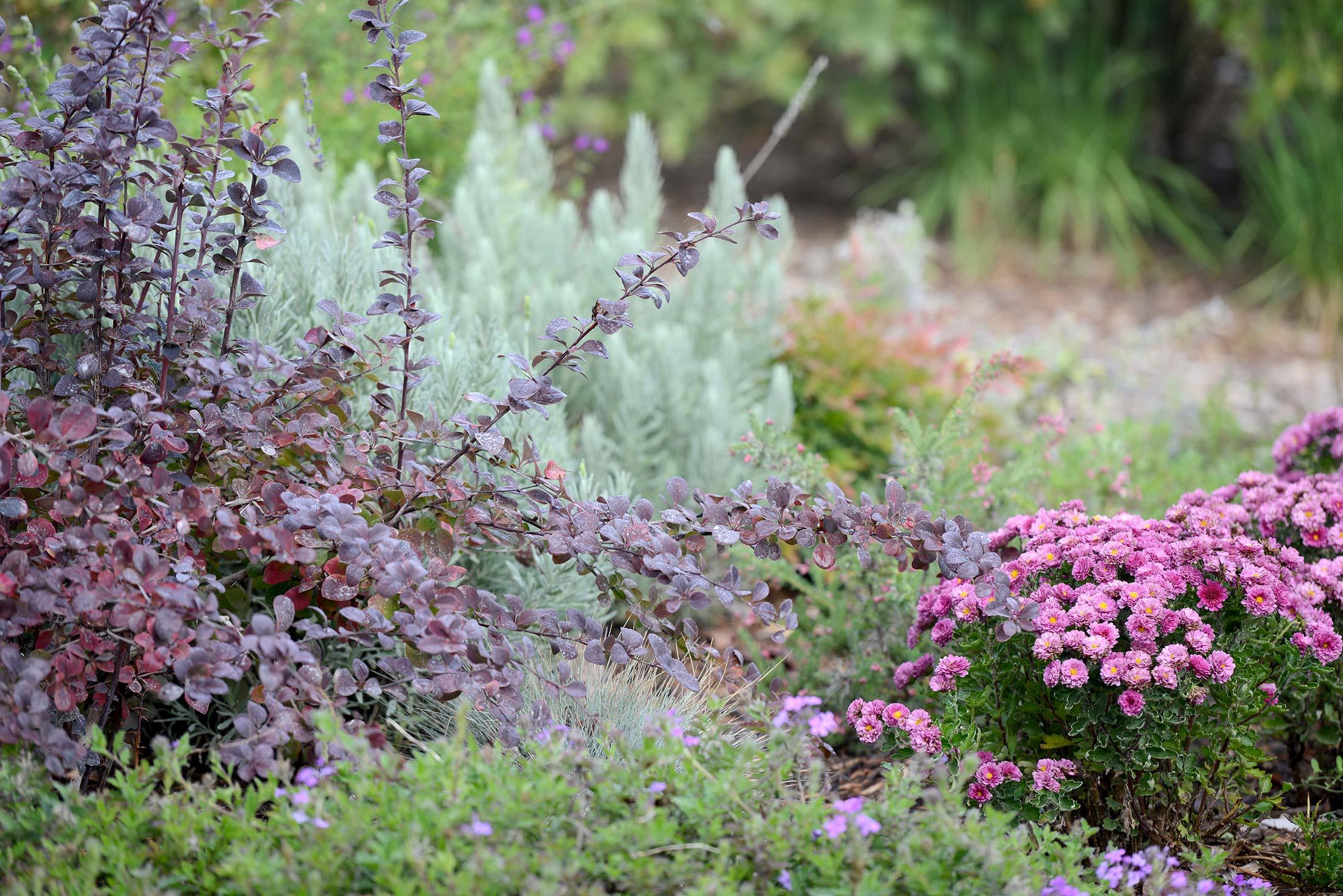 Fog_Garden_DSC_7104