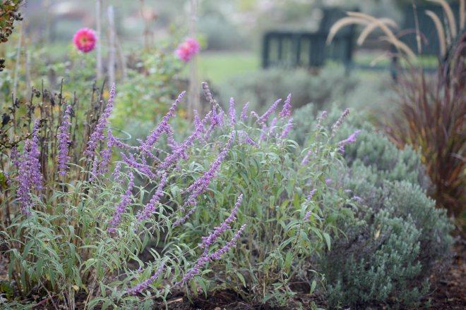 Fog_Garden_DSC_7109