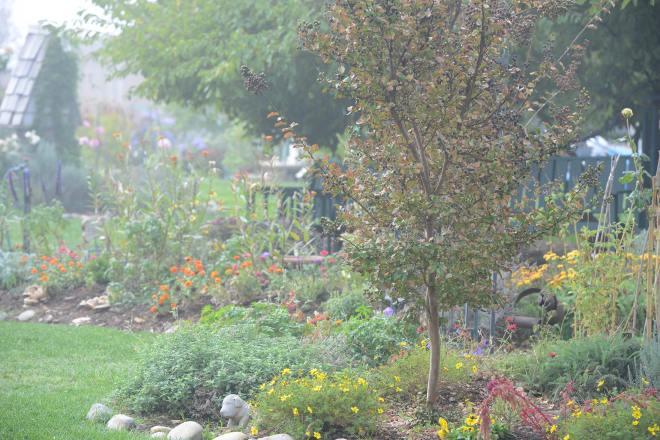 Fog_Garden_DSC_7114