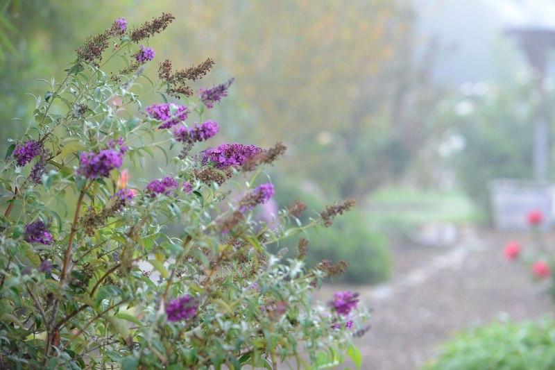 Fog_Garden_DSC_7115