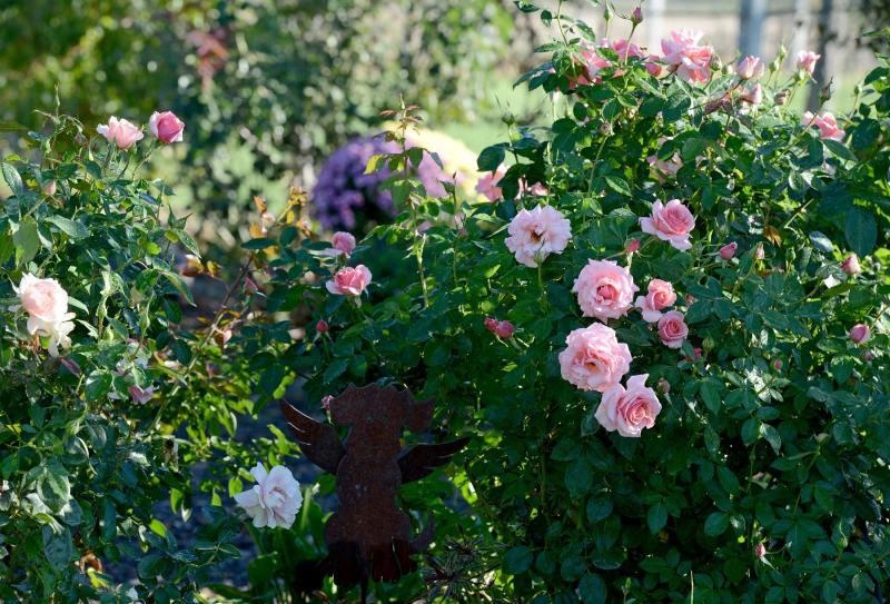 Garden_DSC_6373