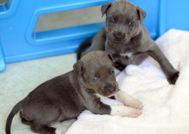 Lunas Pups_DSC_5060