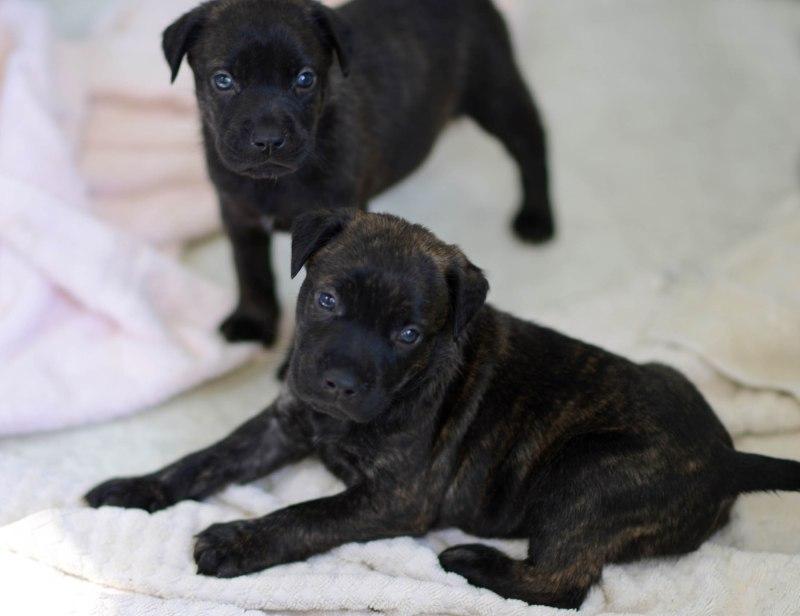 Lunas Pups_DSC_5079
