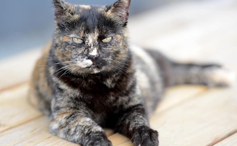 Wordless Wednesday: CatsRule