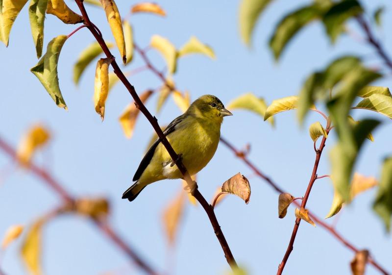 Bird_DSC_8870