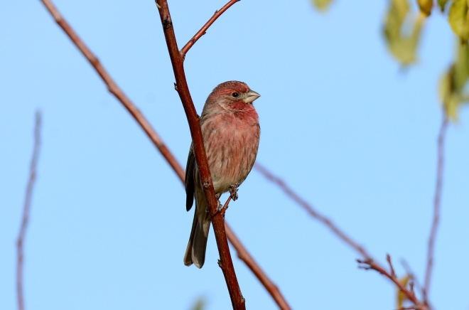 Bird_DSC_8879