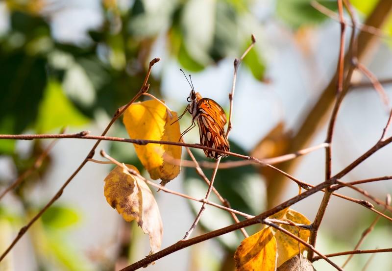 Butterfly_Fall_DSC_8738