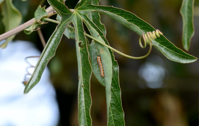 Caterpillar_DSC_8949