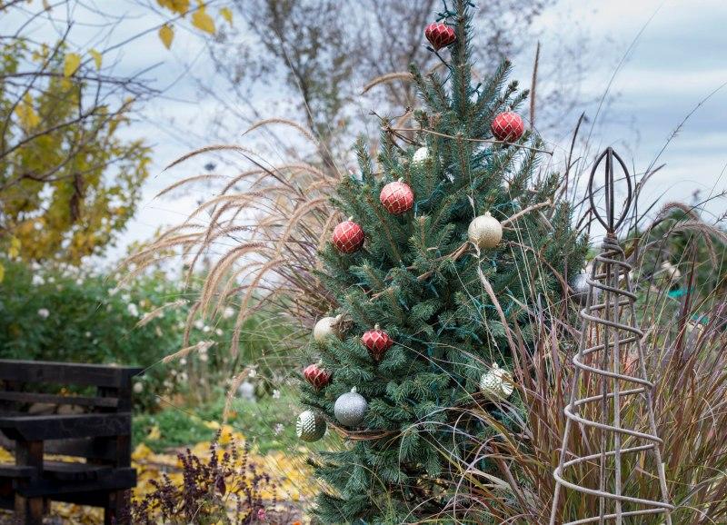 Christmas_Tree_DSC_9970